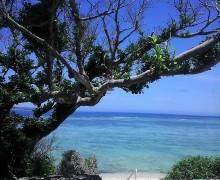 沖縄と結婚式とタコライスの歴史